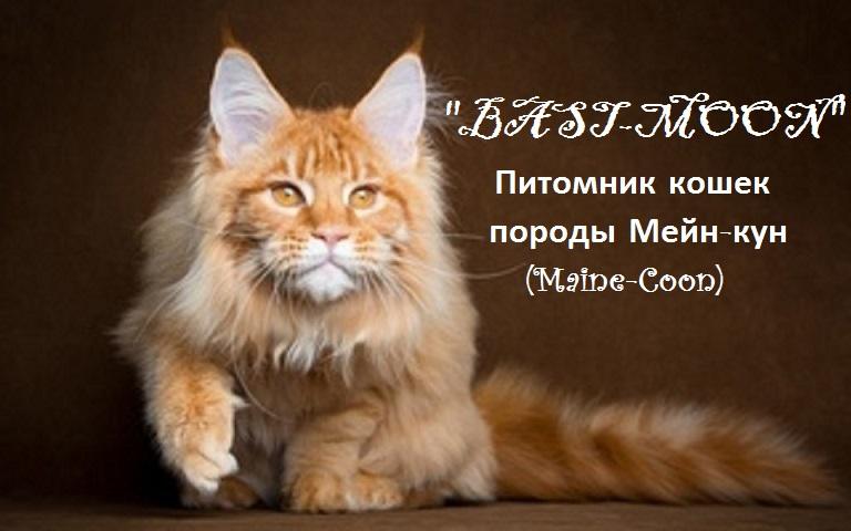 питомник кошек породы Мейн кун