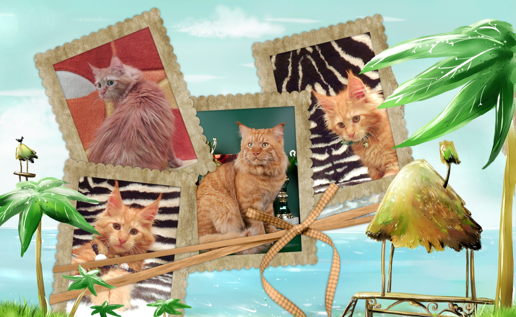 Мейн-кун котята